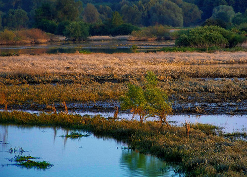 las trees sunset grass forest landscape poland polska backwater trawa drzewa krajobraz zmierzch światłocień rozlewisko coloursofwater chairscuro barwywody