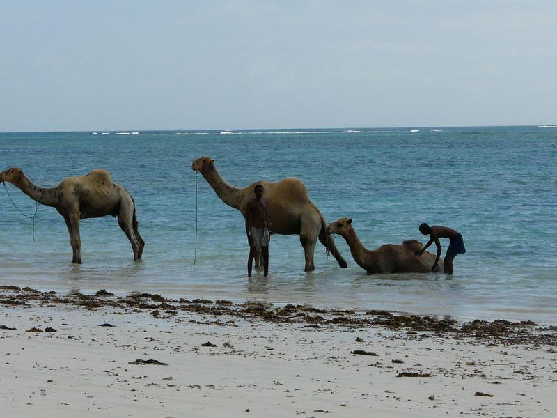 Kenia2007-1164