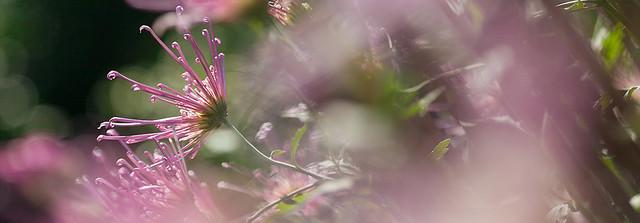 盆景菊藝展