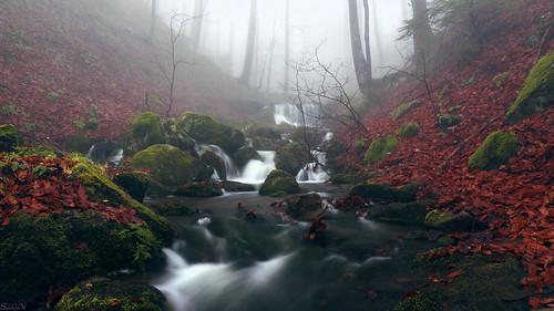 Water + autumn dreams