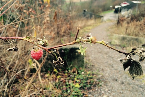 Roadside Raspberry November Edition