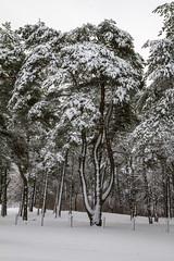 Neshotah Park