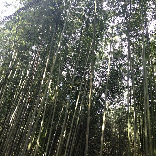 Kyoto - bamboo forest