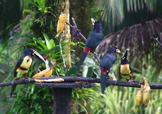 Costa Rica 2006 - 477a