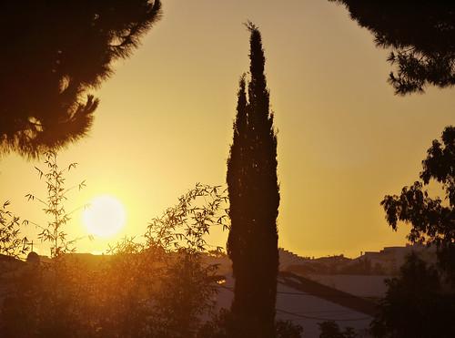 trees summer sun portugal nature silhouette sunrise rooftops villa algarve montenegro