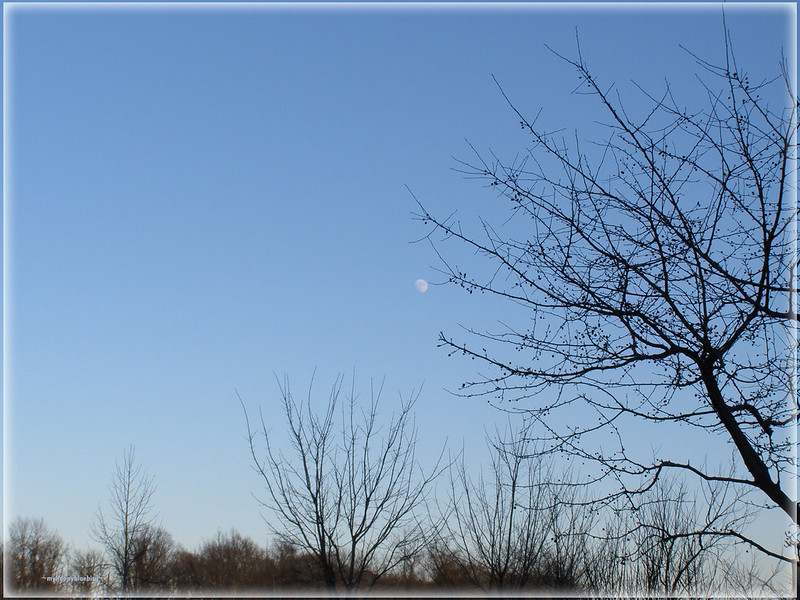 ~ new year's day moon...