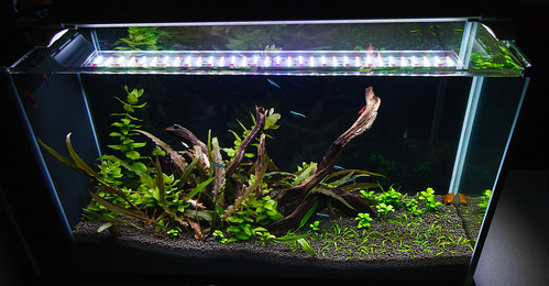 Fluval Spec V after a reshape with UpAqua Aquasand substrate.