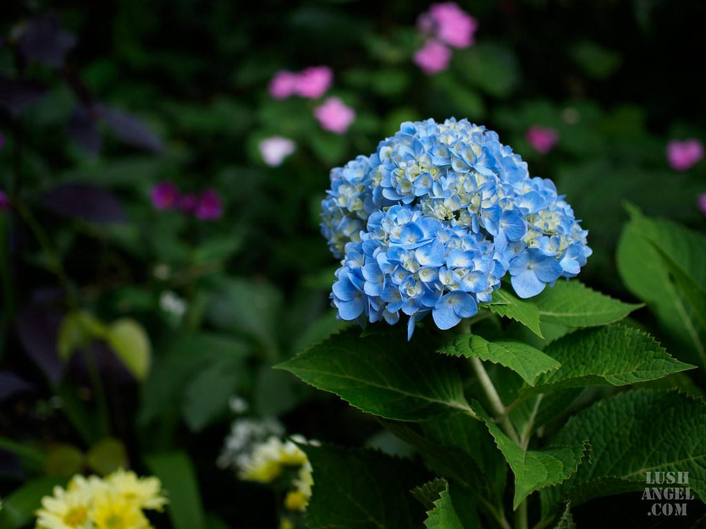 tagaytay-flowers