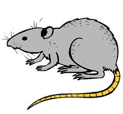 ratas, triana, triana al dia, sevilla, actualidad, noticias