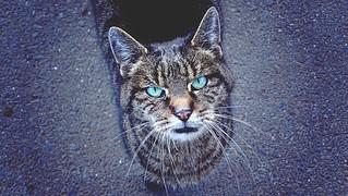 Look into my eyes!/Schau mir in die Augen!