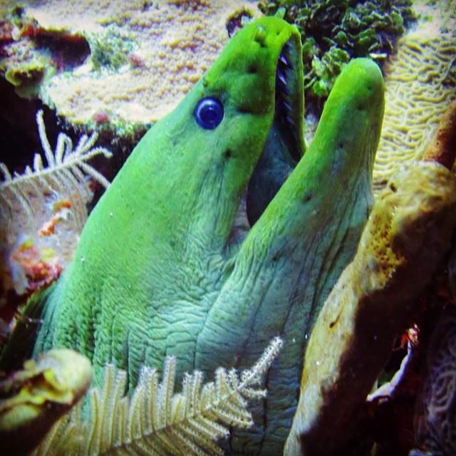 Moray eel found in San Andrésa