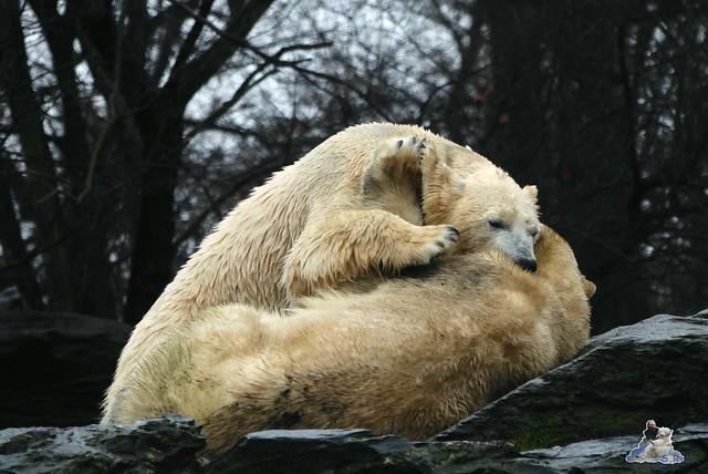 Tierpark Berlin 10.01.2014 27