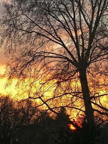 sunset sky sun germany deutschland sonnenuntergang hessen himmel sonne darmstadt herrngarten kyriakos11