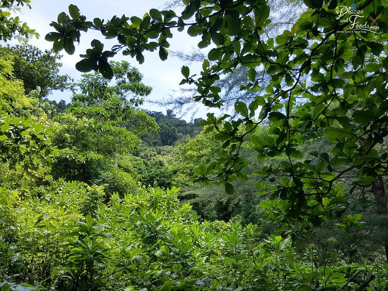 tachai island jungle