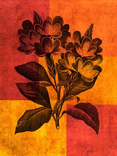 Flowers digital collage
