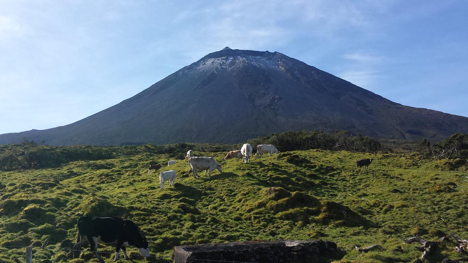 Pico Island Views