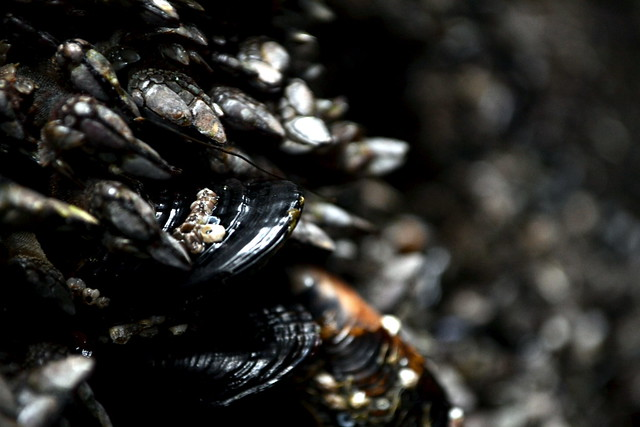 Barnicles and Mussels