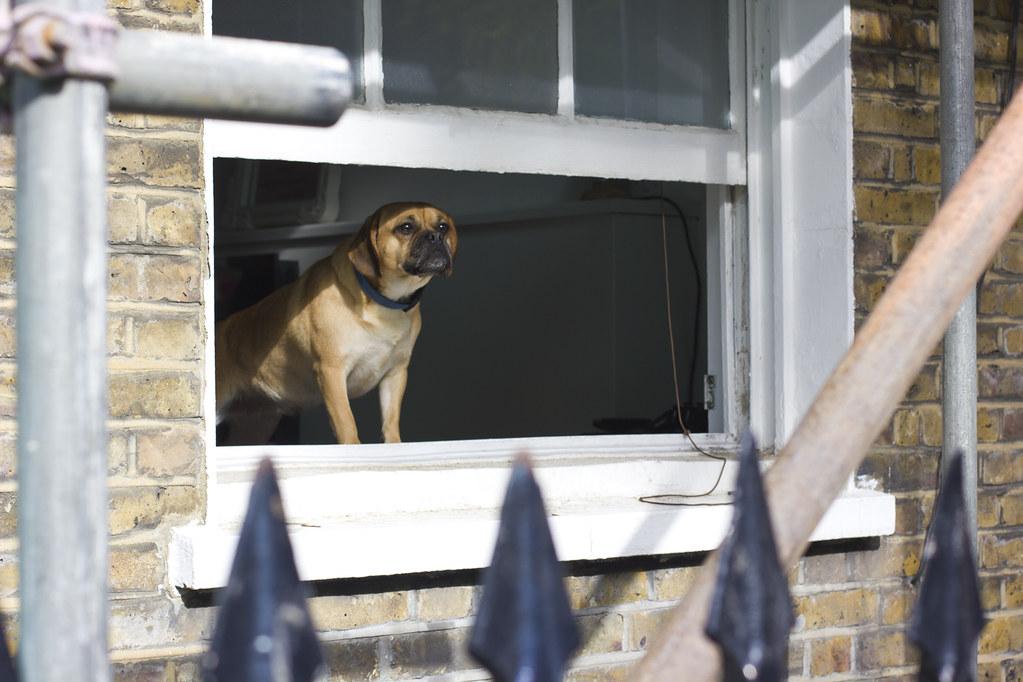 dog in window kings cross london cute puppy small