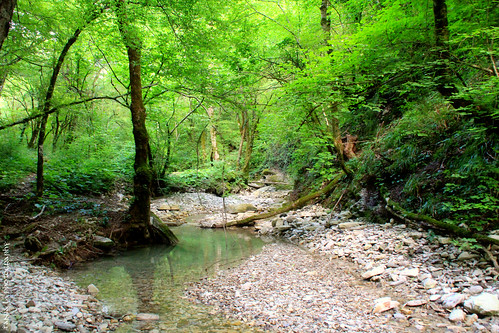 trees mountain nature water forest landscape stream