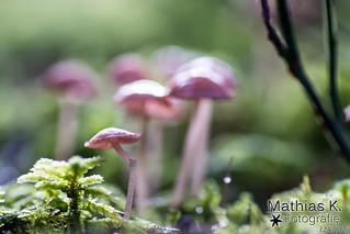 Pilze | Projekt 365 | Tag 324