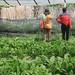 Memotret Kebun