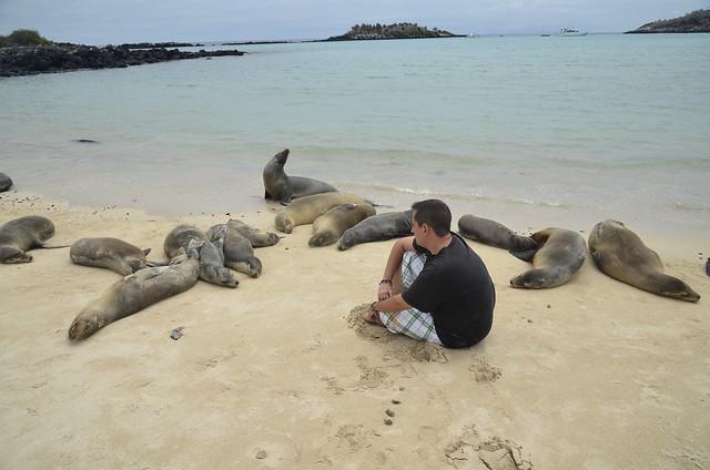 En una playa de isla Santa Fe (Galápagos) con leones marinos