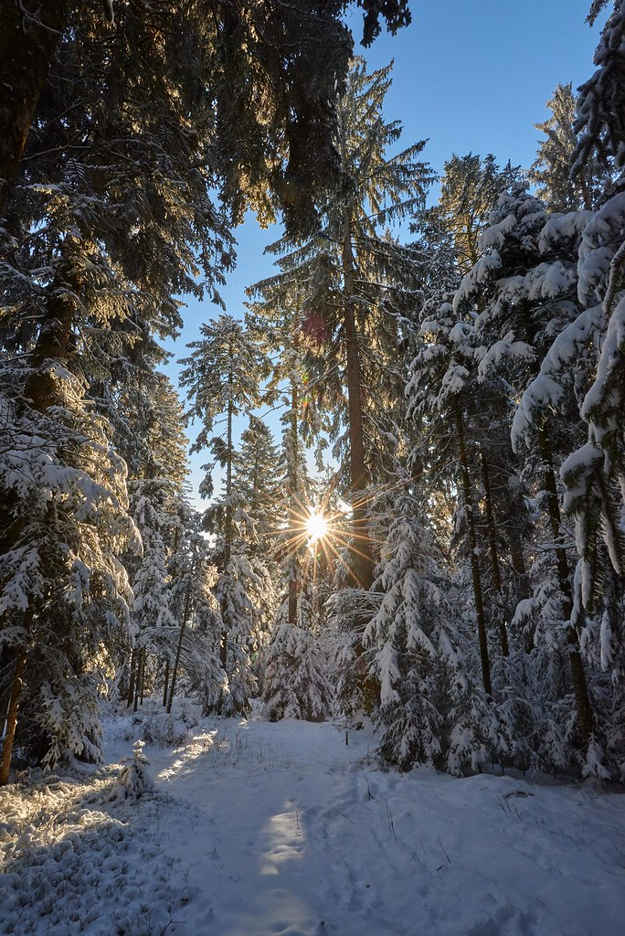 Sunlight between trees and snow - Chuderhüsi