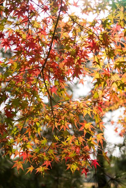 岡山の後楽園は紅葉の名所