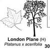 trees-plane-London
