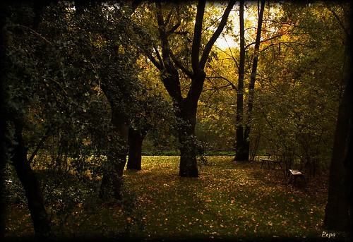 madrid árboles otoño parques elcapricho
