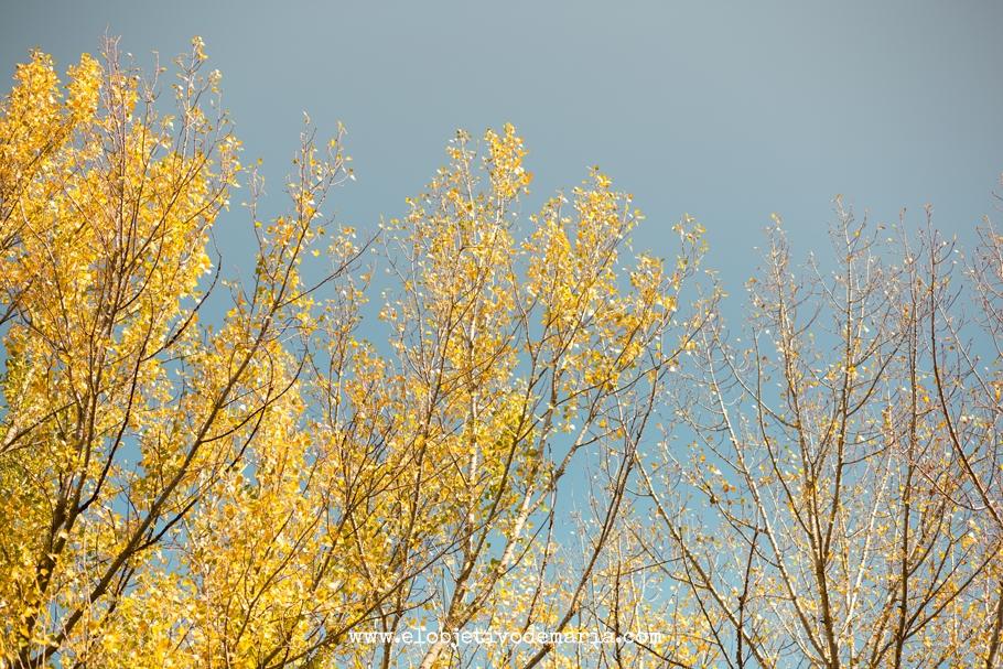 Caida de hojas amarillas