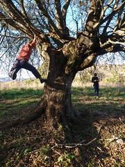 Tree or Smartphone?
