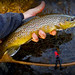 Election Day Fly Fishing
