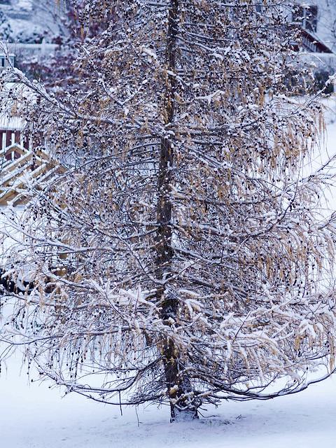 Winter2014-5