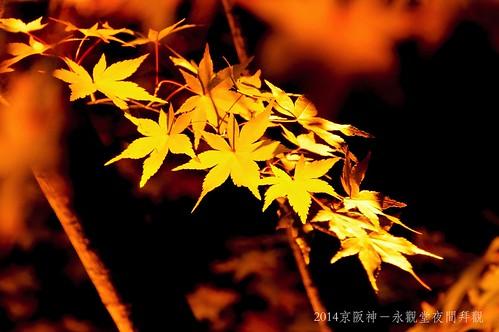 2014京阪神-永觀堂夜間拜觀2292_001