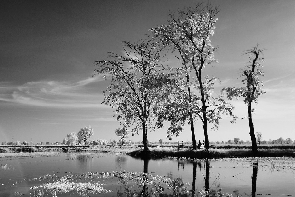 9 Tree lake front processed BW EPM1
