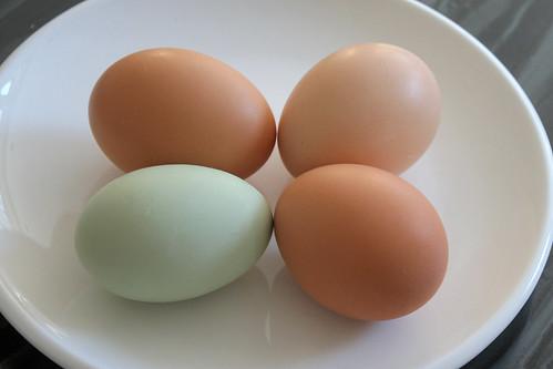 eggs! IMG_1395b