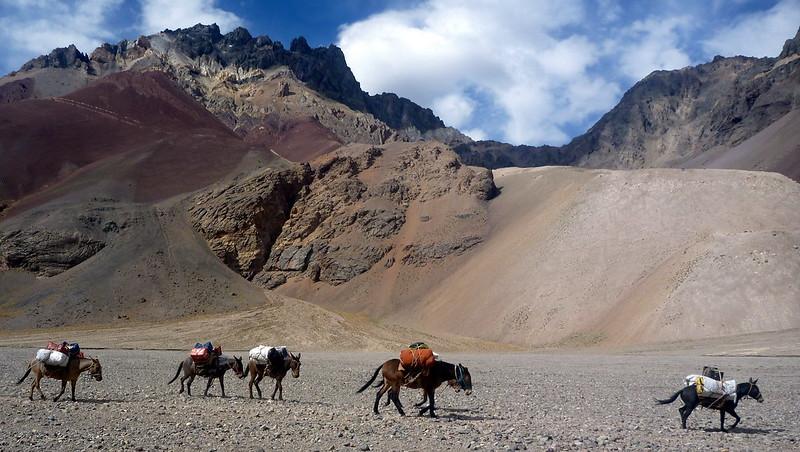 Une caravane de mules nous dépasse