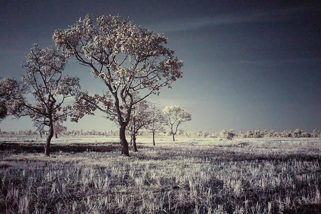 8 Tree processed FUJI