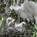 Five in the Nest by Jeff Clow