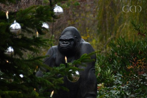 Gorilla Bobby does not look s pleased with Christmas tree..;)