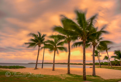ocean sunset beach water clouds palms sand