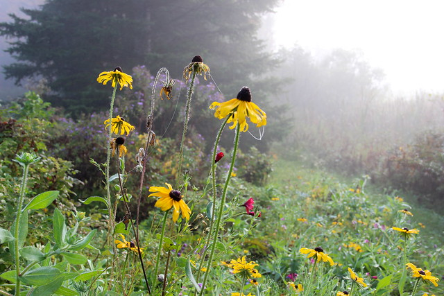 wildflowers in fog