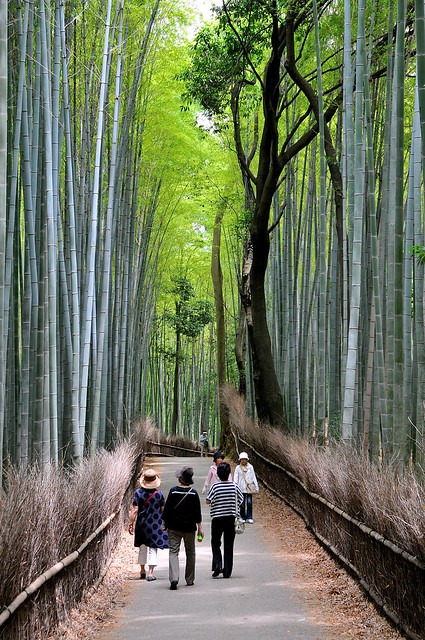 Walking the bamboo grove