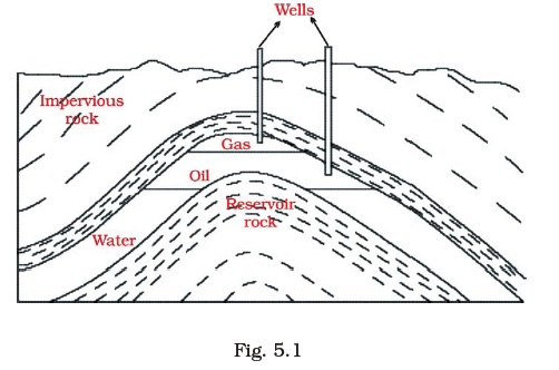 Class 8 Important Questions For Science Coal And Petroleum