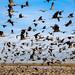 Cranes 2 by Mussi Katz