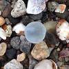 Marble #beachmarble #seaglass #seamarble