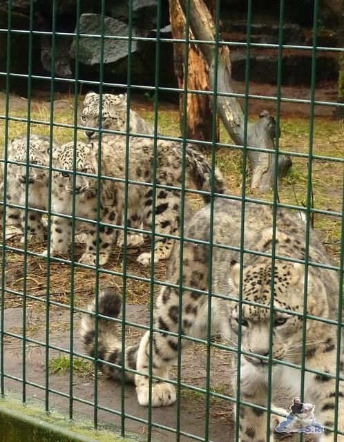 Tierpark Berlin 10.01.2014 115