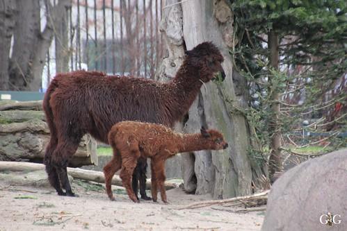 Zoo Berlin 11.01.2015 55