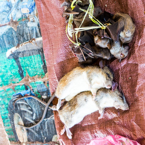 fish lunch market mice rats laos bats namon oudomxay